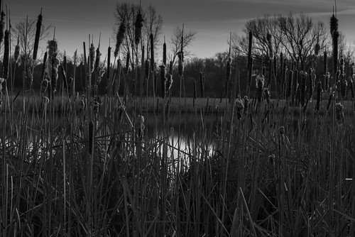 blackandwhite bw nature sunrise landscape 50mm blackwhite illinois pentax photoaday istds lakezurich project365 smcpa50mmf14 cubamarsh pentaxart