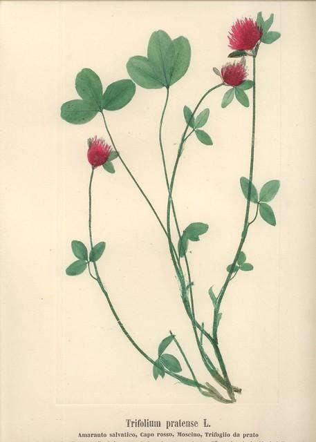 Flora dell'Italia settentrionale