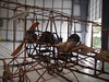 Gonzales Brothers Tractor Biplane 1912 7