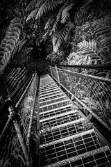 Up the Giant Stairway