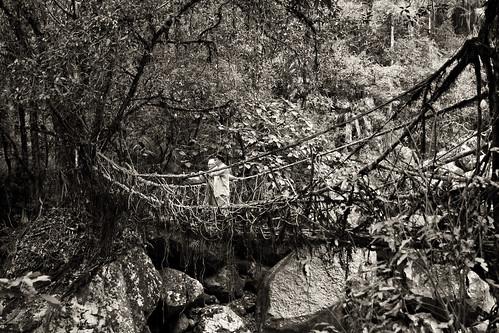Us. On a living bridge.