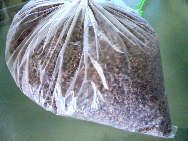 Rice from Bario