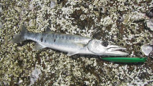 サムイ島 釣り