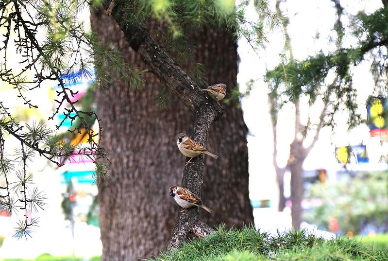 moineaux sur une branche madrid