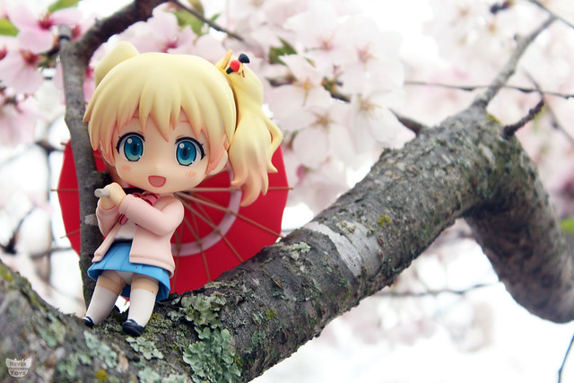 alice with cherry blossoms wm