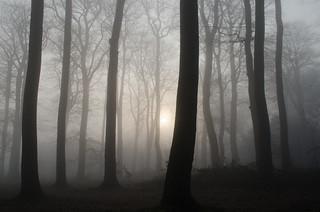 Misty woods UNEDITED