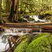 An Oregon Paradise by rowjimmy76