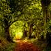 Winding Woodland Path by Rob Felton