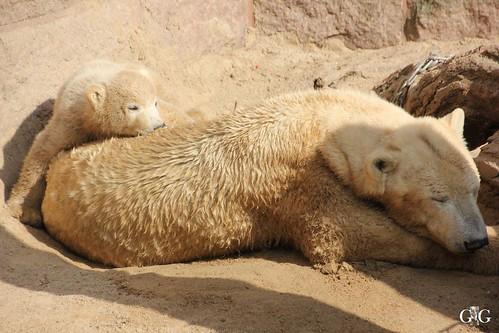 Zoo Rostock 11.04.20158
