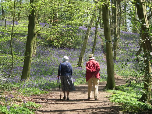 A walk in the bluebell woods