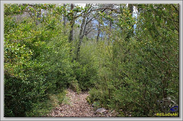 16 Ruta de los Duendes y Bosque encantado
