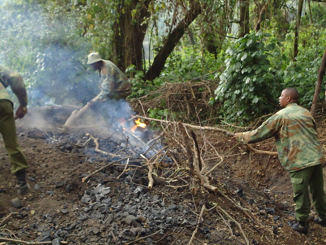 The future of Kenya's indigenous forest cover is under threat but this has little to do with poverty and ignorance – experts say that it is greed which allows unsustainable practices, such as the lucrative production of charcoal and logging of wood