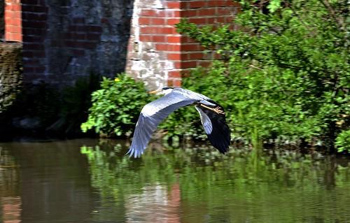 Heron inflight