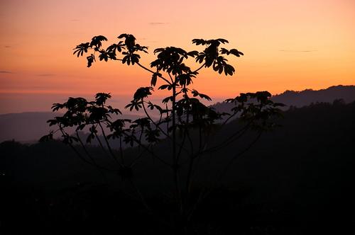 sunset mountains tree forest costarica cloudforest tropics cordillera centralamerica talamanca cecropia
