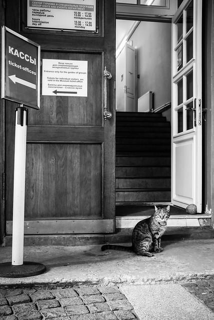A kitty in the Hermitage Museum, Saint Petersburg, Russia サンクトペテルブルク、エルミタージュ美術館敷地内の子猫