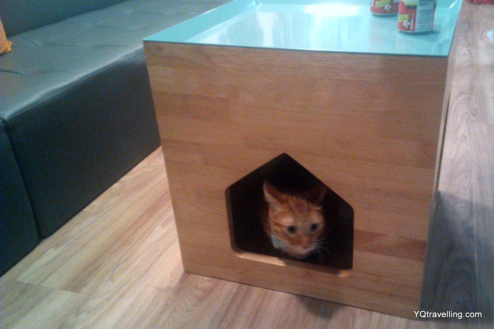 Cat cafe Neko no Niwa dating event
