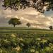 Framing Spring by Captain Nikon