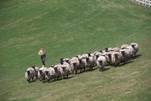 20160503羊と雲の丘_22
