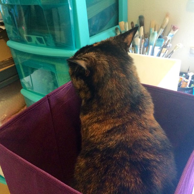 Polly #cats #tortie #tortiecats #earsofmaximumperturbation #whatsinthebox