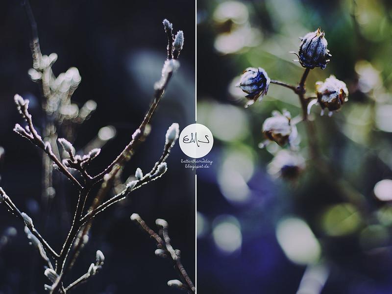 winterspirit (10) Kopie-horz Kopie