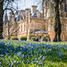 Waddesdon Bluebells by Koopa-Troopa