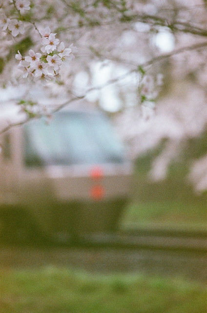 桜とロマンスカー