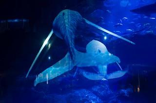 Projection Mapping(sumida aquarium)