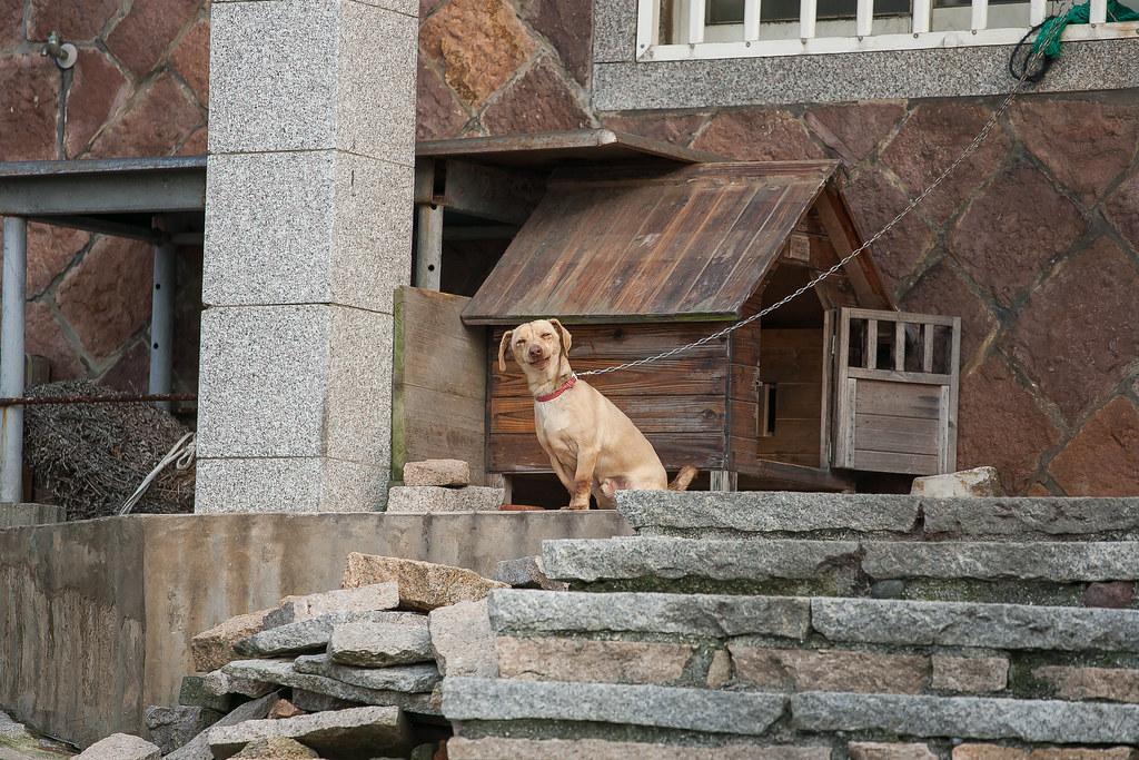 2015 0413 Dog of Dongju' Matsu 01