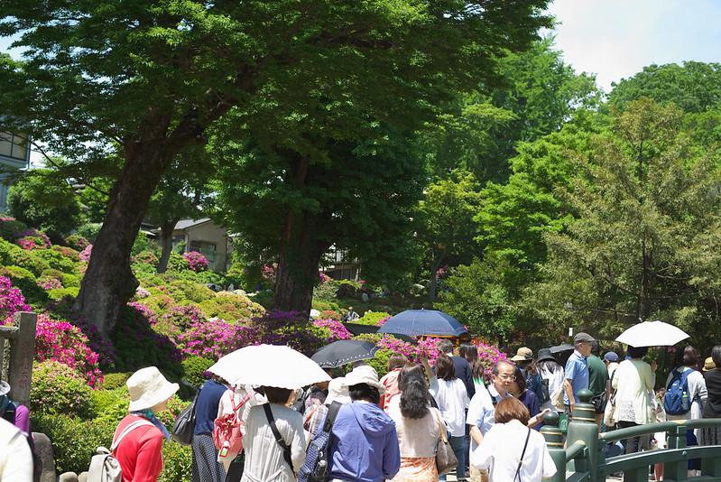 東京路地裏散歩 根津神社のつつじまつり 神社巡り 2015年5月3日