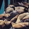 Sleepy sea lions. #sunshine #sunday #snoozing