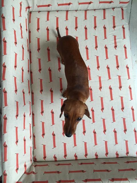 DOGS TRUST SOFA COM