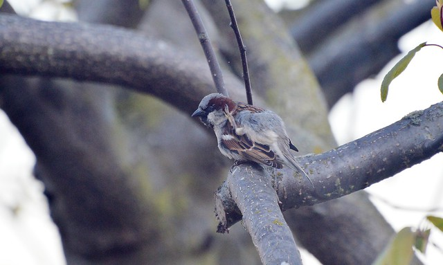Sparrow May 16  (2) Sorry Did you Say Somthing Taken through front room Window