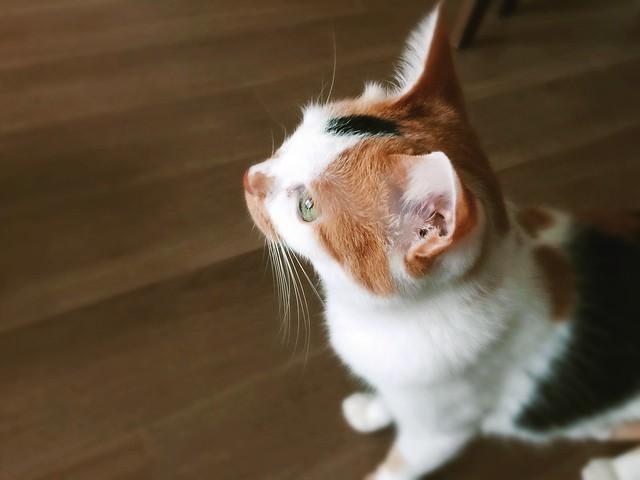 #cat #cats #catsofinstagram #catstagram #instacat #instagramcats #neko #nekostagram #猫 #ねこ #ネコ ネコ部 #猫部 #ぬこ #にゃんこ #ふわもこ部 #三毛猫