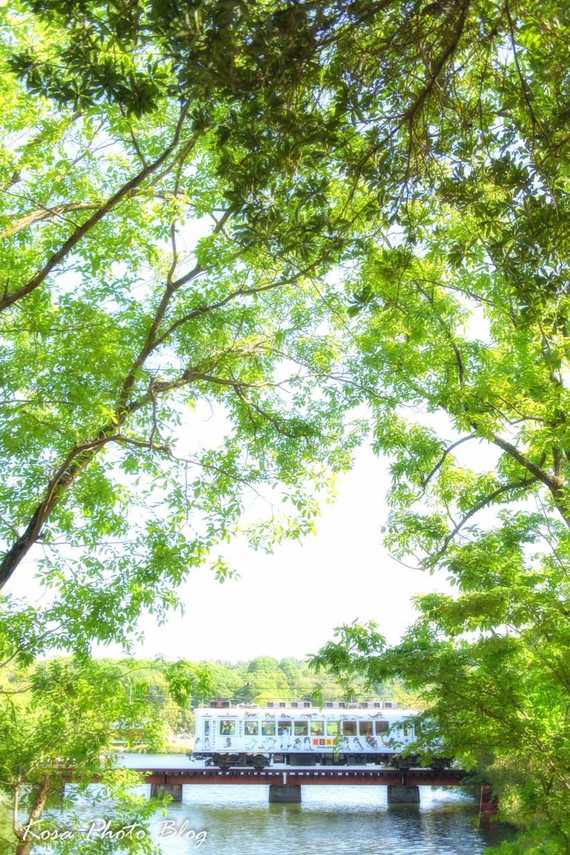 DSC_6266-Edit.jpg