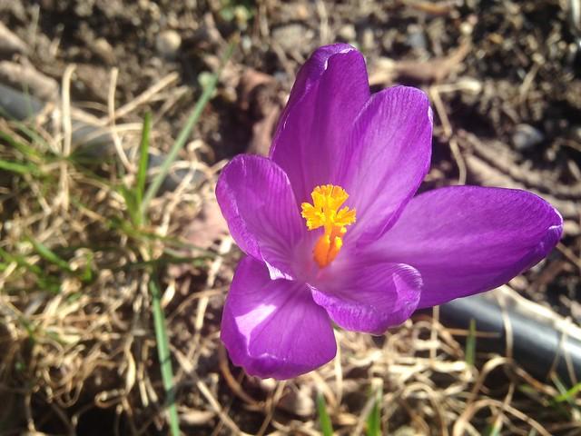 Photo a Day // April // Week 14