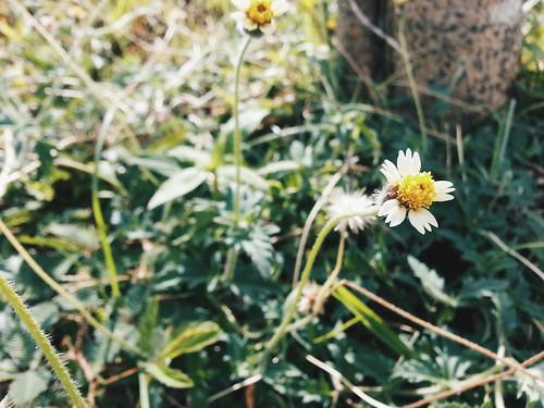 Ameliawrites-fridayfavorites-24Apr15