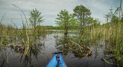 Lake Marion Plantation Islands-046