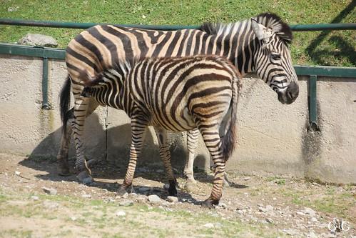 Zoo Bratislava 18.04.201576