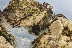 boulder, sea, tide pool, igneous rock, geology, bedrock, terrain, rock,