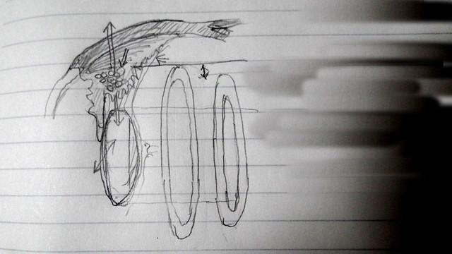 新・視力回復法用ネタ〜誰も書いてない毛様体筋の構造と動きを考える(実は水晶体って、前後にも動いちゃうんじゃない?)