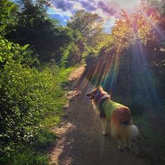 Maisie Dobbs Over the Rainbow