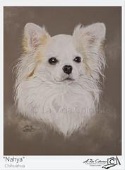 Portrait Chihuahua Nahya