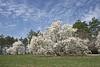 Morton Arboretum April 2015