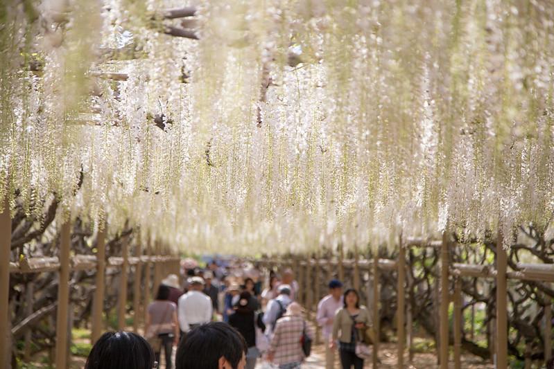 ashikaga_flowerpark-38