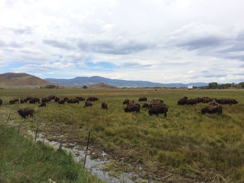 road buffalo colorado pinos rd delnorte buffaloes 81132 delnorteco pinosrd