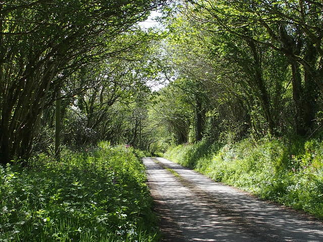 Down the lane - full of natural garden ideas