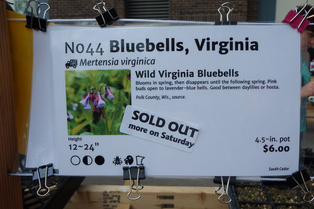 sign marking the Virginia bluebells section, 4-inch pot for $6, with a sticker that says Sold Out More On Saturday