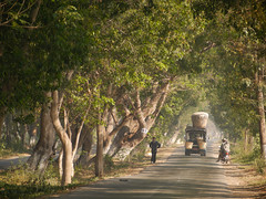 Picturesque tree-lined roads lead from Nyaung Shwe to neighboring communities around Inle Lake. This area is one of Myanmar's most popular tourist attractions.