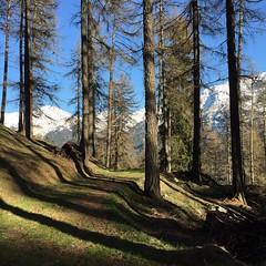Wald und Berge.