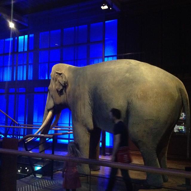 Een olifant!